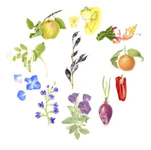Barbara Holmer, Botanical Art as Color Wheel
