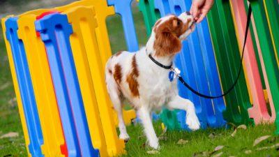 Canine Adventure